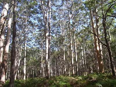 2012 5 Boranup Forest.jpg